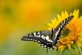 Картинка цветок, бабочка, природа, мотылек, крылья, лепестки