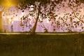 Картинка фонарь, девушка, вечер, пара, деревья, романтика, парень