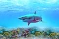 Картинка море, вода, цвет, акула, кораллы