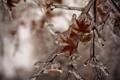 Картинка листья, лед, зима, ветка, природа