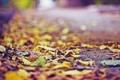 Картинка листья, осень, асфальт