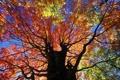 Картинка осень, листья, ветки, дерево, ствол