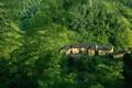 Картинка лес, зеленый, дом