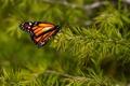 Картинка иголки, бабочка, ветка, метелик, батрфляй