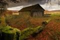 Картинка дом, забор, мох
