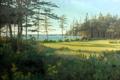 Картинка лес, лето, пейзаж, озеро, река, поляна, сосны