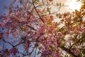 Картинка цветы, природа, дерево, весна