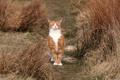 Картинка поле, кошка, природа