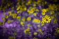 Картинка природа, фон, цветок
