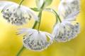 Картинка цветок, природа, экзотика, 1астранция