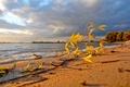 Картинка небо, листок, пляж, природа, ветви, пейзажи, фон