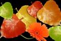 Картинка осень, цветок, листья, свет, блеск, лепестки