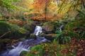 Картинка листья, лес, река, Природа, водопад, ручей, осень