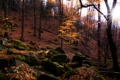 Картинка осень, лес, солнце, природа, камни, листва, мох