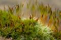 Картинка растение, мох, размытость