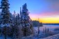 Картинка зима, лес, небо, снег, деревья, закат, ель
