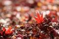 Картинка листья, блики, размытость, опавшие, осенние