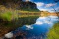 Картинка дерево, Озеро, камыш