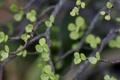 Картинка природа, листья, растение, ветка