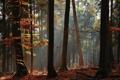 Картинка осень, лес, свет, деревья, стволы, листва
