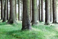 Картинка природа, деревья, фото, дерево