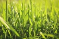 Картинка зелень, лето, трава, макро, природа