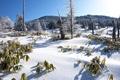 Картинка зима, иней, трава, снег, деревья, горы