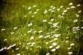 Картинка природа, обои, поле, фото, цветы