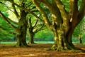 Картинка лес, трава, деревья, парк