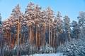 Картинка зима, лес, небо, снег, елки, сосны