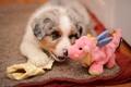 Картинка игрушка, собака, щенок