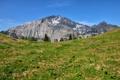 Картинка поляна, горы, небо, ели