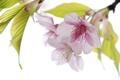 Картинка листья, весна, лепестки, сад, цветы
