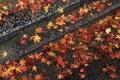 Картинка осень, листья, камни, ступени