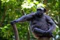 Картинка природа, поза, обезьяна