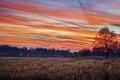 Картинка поле, осень, лес, небо, деревья, закат, фото
