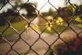 Картинка листья, веточка, забор, ветка, ограда