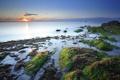 Картинка море, водоросли, камни, побережье, дымка, франция