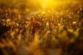Картинка трава, цвета, солнце, лучи, свет, цветы, природа