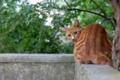 Картинка кошка, взгляд, балкон