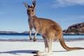 Картинка кенгуру, небо, облака, горы, Австралия, море