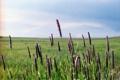 Картинка облака, стебли, небо, трава, куст, поле