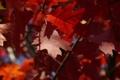 Картинка осень, деревья, Рыжие листья