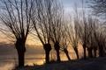 Картинка дорога, деревья, река, утро