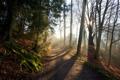Картинка trees, shadows, sunlight, path, Forest