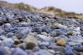 Картинка ветки, камни, берег, фокус, камушки