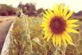 Картинка vintage, beautiful, sun, awesome, cool, sun flower