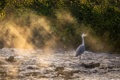 Картинка свет, природа, Heron mist