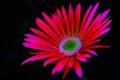Картинка цветок, природа, фон, растение, лепестки