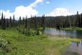 Картинка лес, трава, природа, парк, фото, США, Washington